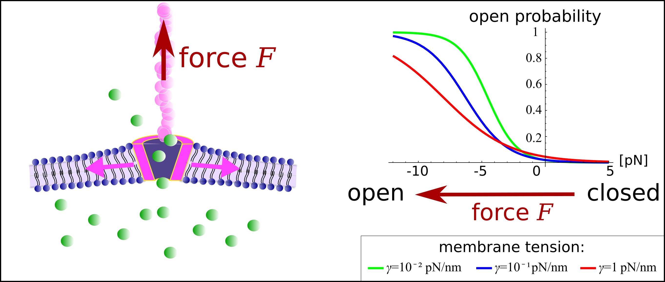 Micromechanics of a thethered channel in a membrane, Benedikt Sabass